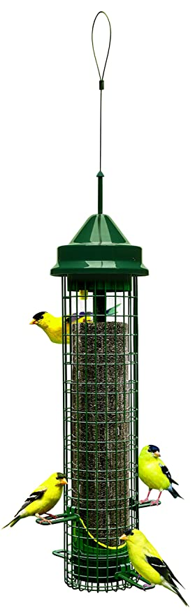 bird in feeder garden feeders dp patio ca lawn perky one finch all pet amazon