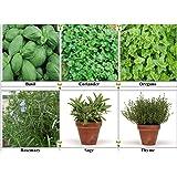 Viridis Hortus - 6 Pack Herb Collection Seeds - Basil, Coriander, Oregano, Rosemary, Sage & Thyme