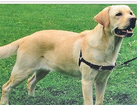 JWPC Arnés para Perro Fácil de Poner y Quitar, Arnés para Mascotas ...