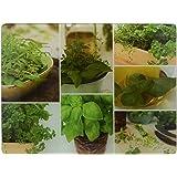 Creative Tops Planche à découper en verre durci Motif herbes aromatiques pour plan de travail Par Creative Tops