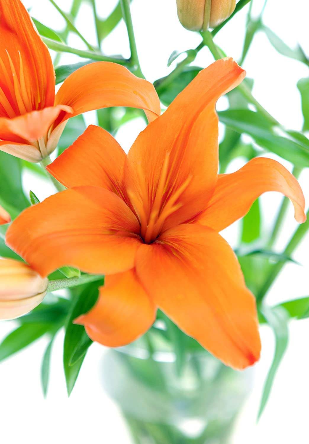 Amazon Orange Lily Bouquet 8 Stems With Vase Grocery