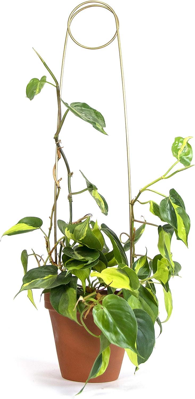 4 Verschiedene Designs Dekorative Spaliere f/ür Pflanzen Aus Recycling-Aluminium hergestellt F/ür Pflanzkasten Zimmerpflanzen /& mehr 4 Rankhilfen f/ür Kletterpflanzen Botanopia Rankhilfe