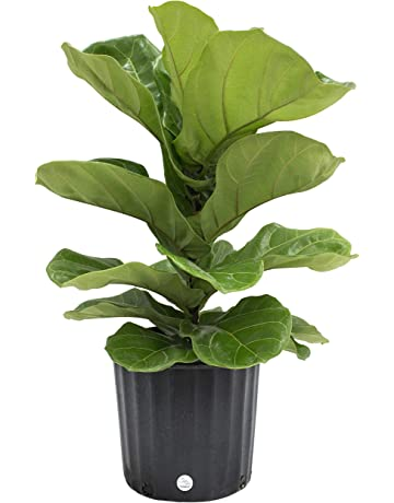 Amazon.com: House Plants: Grocery & Gourmet Food on