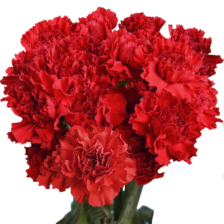 Whole Foods Florist Wedding: Amazon.com : GlobalRose 100 Pink Carnations