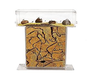 Formichiere T di SABBIA (Formiche Gratuiti con Regina) - New educational Ant farm - Formicarium for LIVE ants AntHouse