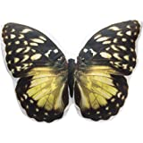 Charming Yellow Butterfly Pillow Photo-Realistic Image Printed on a Stuffed Throw Cushion