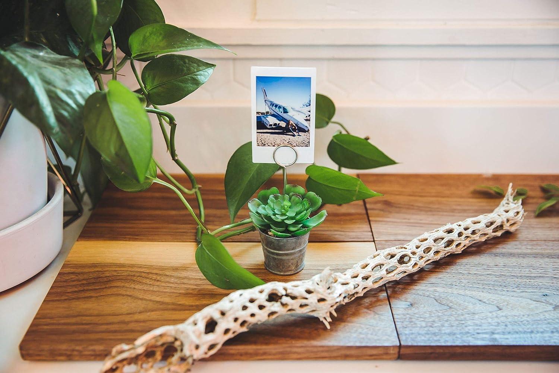 Flora Bunda Artificial Plant Succulent Table Sign Tin Pot,Set of 6 in PVC Box