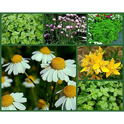 """Herb Garden"" Special, 6 Full Size Packs, Heirloom Herb Seeds, Non-GMO Herbs : Garden & Outdoor"