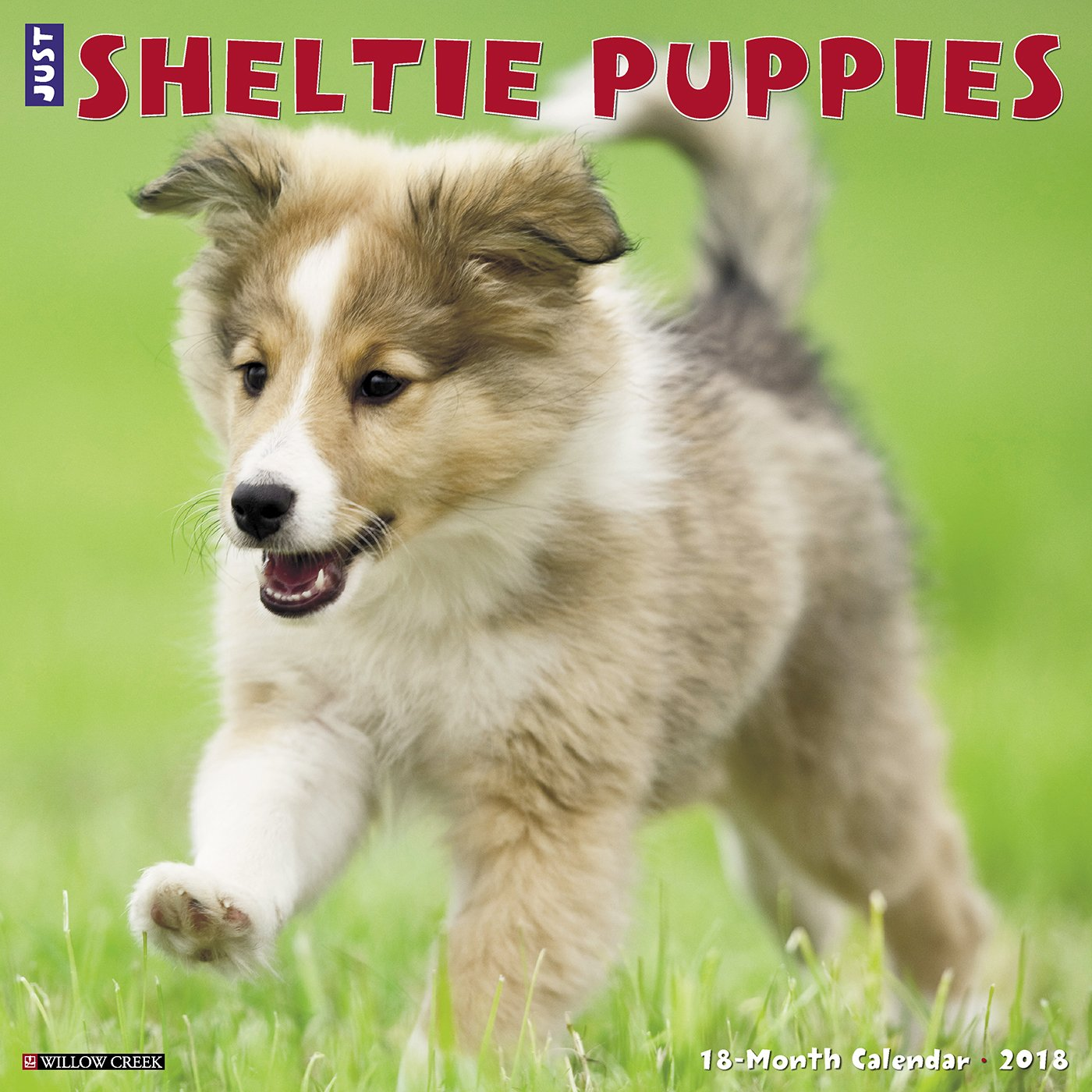 Just Sheltie Puppies 2018 Wall Calendar Dog Breed Calendar Amazon