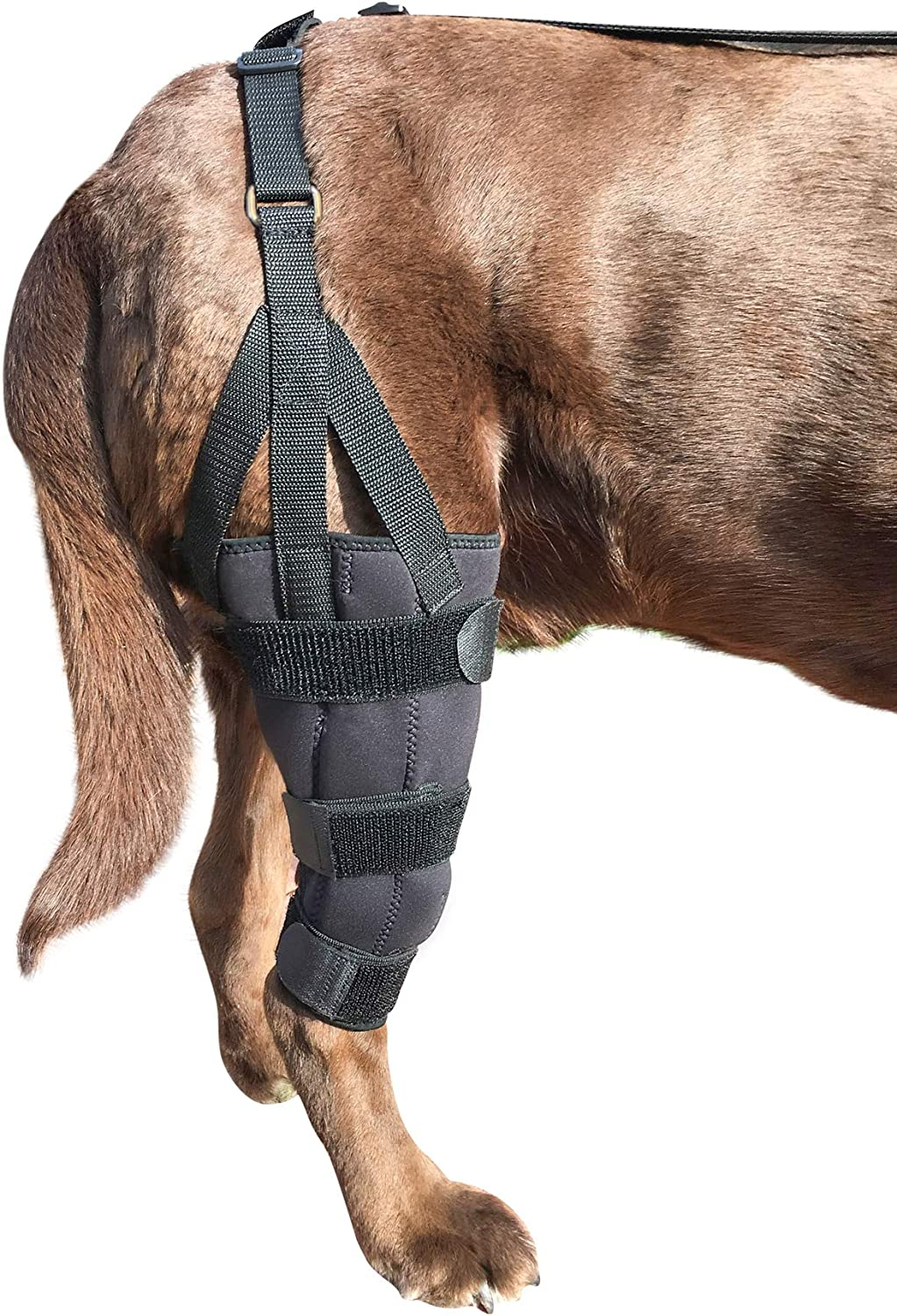 ccl knee brace for dogs