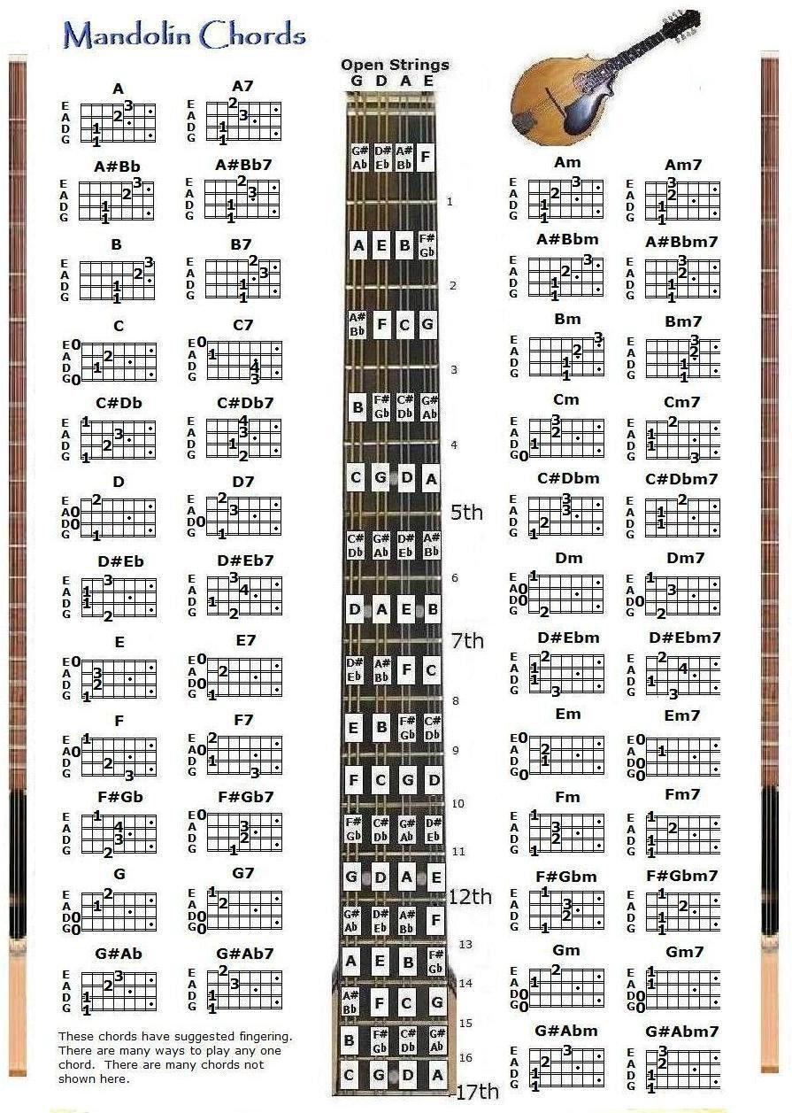 Amazon Mandolin Chords Chart Note Locator Musical Instruments