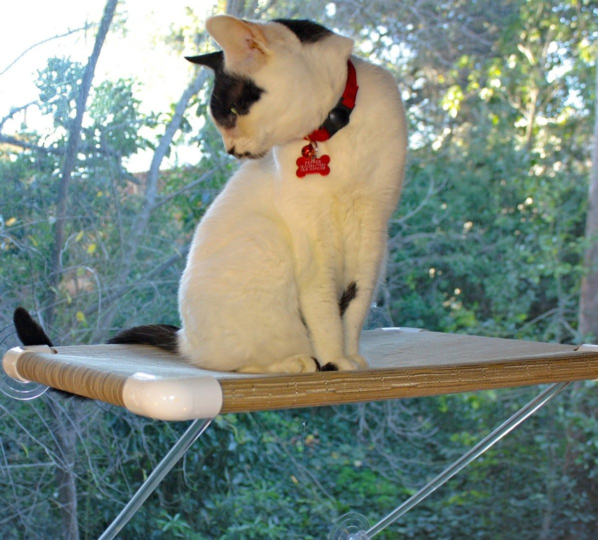"The ""Ultimate Cat Perch"" – No Hanging Wires & Stronger for Increased Reliability (holds 80 pounds)"