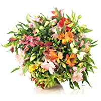 Ramo de Flores ALSTROEMERIAS Variadas | ENTREGA EN 24 HORAS GRATIS | Flores Frescas Naturales y Recién Cortadas a…