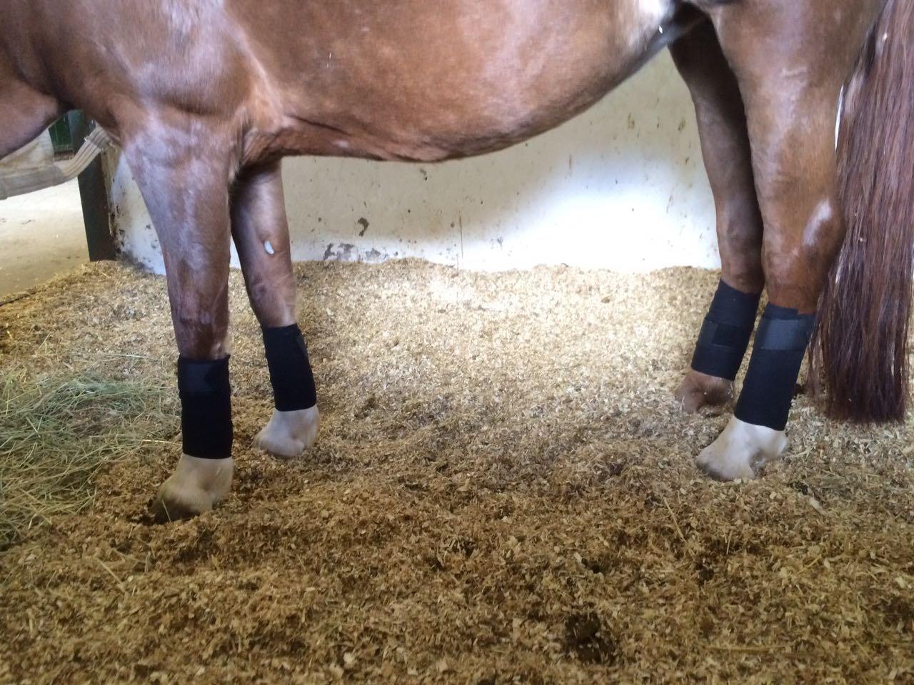 Pferdelinis Vendas para caballos suave y antideslizante vendas de forro polar con cierre de velcro en Juego de 4