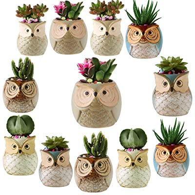 12 Pack 2.5 Inch Owl Succulent Plant Pots Ceramic Set, Cactus Plant Pot,Mini Flower Pot, with A Hole Perfect owl Gifts for Women: Garden & Outdoor