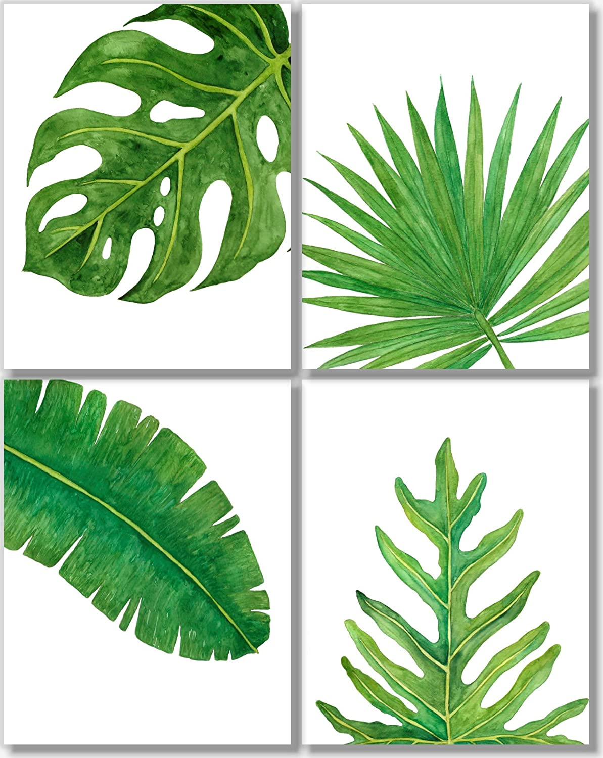 Amazon Com Tropical Leaves Art Prints Botanical Prints Wall Art Watercolor Monstera Date Palm Banana Leaf Decor Set Of 4 11x14 Unframed Handmade Find over 100+ of the best free tropical leaves images. tropical leaves art prints botanical prints wall art watercolor monstera date palm banana leaf decor set of 4 11x14 unframed