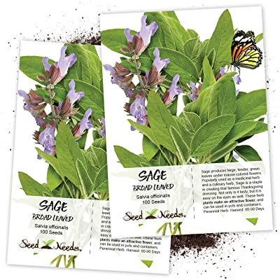 Seed Needs, Broad Leaved Sage Herb (Salvia officinalis) Twin Pack of 100 Seeds Each Non-GMO : Herb Plants : Garden & Outdoor