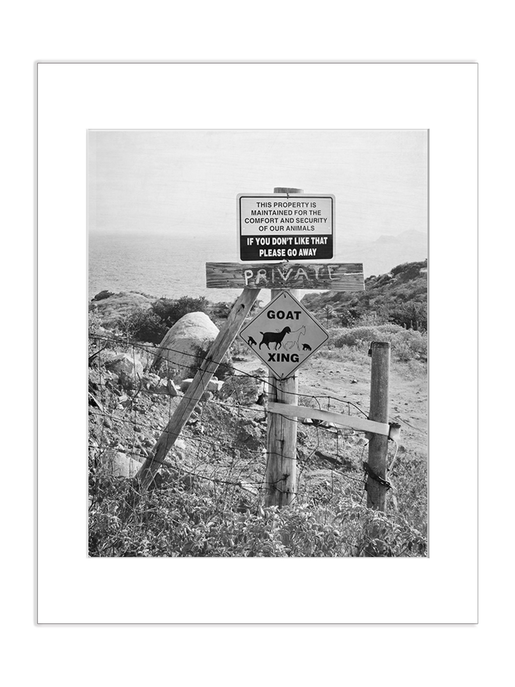Funny Goat and Animal Crossing Street Sign 5x7 Inch Matted Black and White Photo