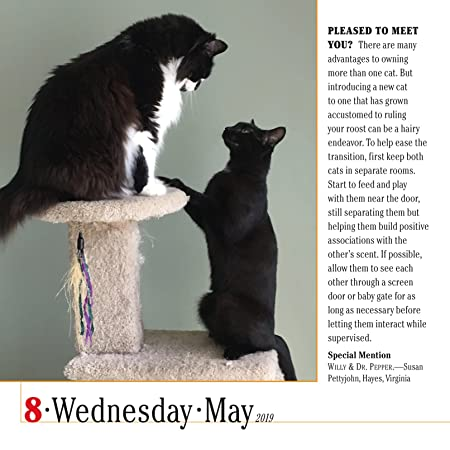 365 Cats Page-A-Day Calendar 2019