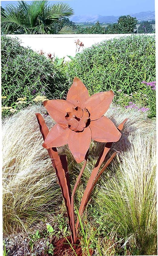 Productos Decorativos para jardín al Aire Libre S678 Daffodil Grande (Cassidy): Amazon.es: Jardín