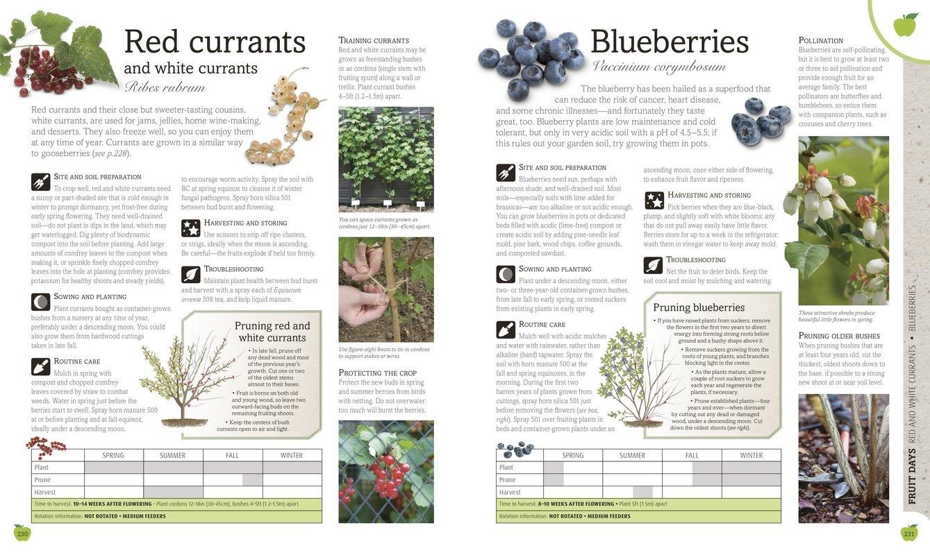 Biodynamic Gardening DK 9781465429865 Amazoncom Books