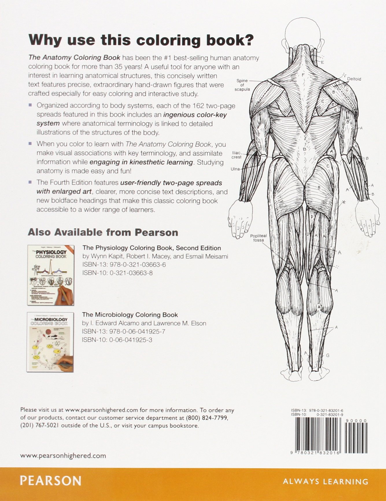 the anatomy coloring book 4th edition wynn kapit lawrence m elson 9780321832016 anatomy amazon canada - Physiology Coloring Book