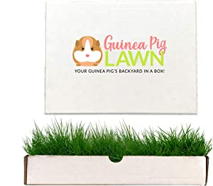 Guinea Pig Lawn Fresh Grass Lounging Mat - Perfect for Lounging Indoor/Outdoor - 12 in x 9 in - Multi-Use, Natural and Disposable