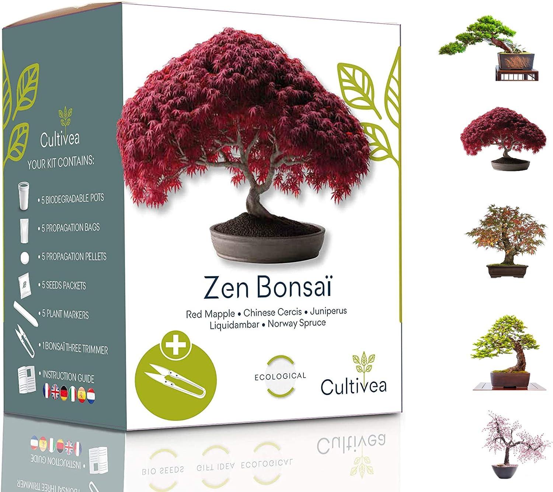Cultivea Mini - Kit de Bonsái para cultivar - Semillas de calidad - Jardín - Idea de regalo (Arce rojo, Cercis chino, Juniperus, Liquidambar, Pícea de Noruega)