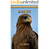 Black Kite: Amazing Pictures & Fun Facts on Animals in Nature