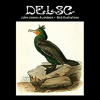 John James Audubon Bird Illustrations