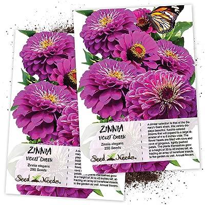 Seed Needs, Violet Queen Zinnia (Zinnia elegans) Twin Pack of 250 Seeds Each : Zinnia Plants : Garden & Outdoor