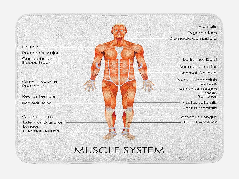Amazon Ambesonne Human Anatomy Bath Mat Muscle System Diagram