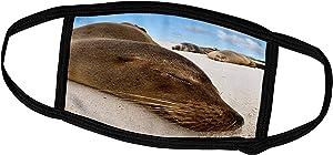 3dRose Danita Delimont - Galapagos Islands - Ecuador, Galapagos Islands, Galapagos Sea Lion - SA07 MDE0120 - Michael DeFreitas - Face Masks (fm_86238_1)