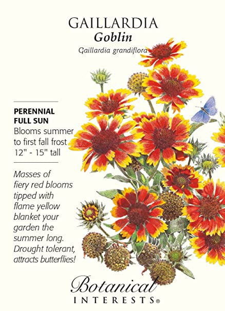 Amazon goblin blanket flower seeds 300 mg gaillardia goblin blanket flower seeds 300 mg gaillardia mightylinksfo