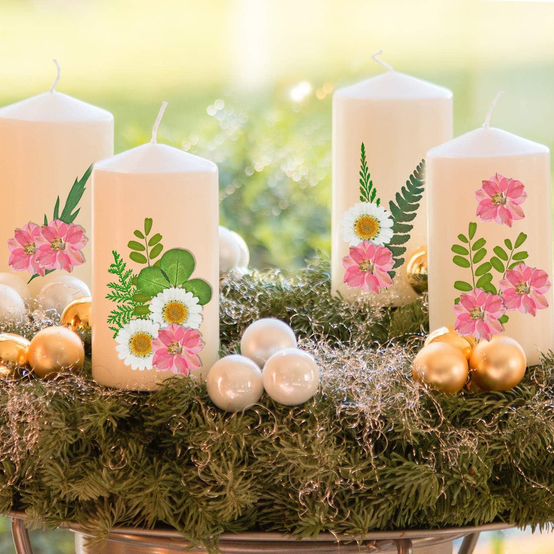 Schmuckanh/änger Bl/ätter Kunstharz BBTO 78 St/ück echte getrocknete gepresste Blumen G/änsebl/ümchen Bl/ütenbl/ätter Nagelkerzen nat/ürlich gepresste Blumen f/ür DIY-Handwerk Larksporn