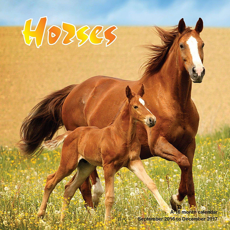 Horse Calendar - 2017 Wall Calendars - Calendar 2016 - Animal Calendar - Monthly Wall Calendar by Magnum