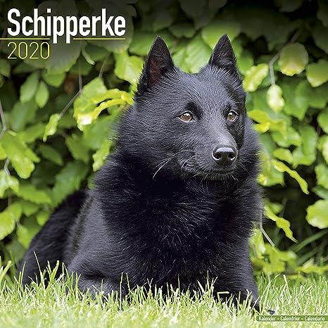 Schipperke Calendar 2020 - Dog Breed Calendar - Wall Calendar 2019-2020
