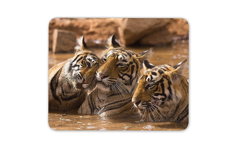 Tiger familia tapete de ratones Cojín: Amazon.es: Electrónica