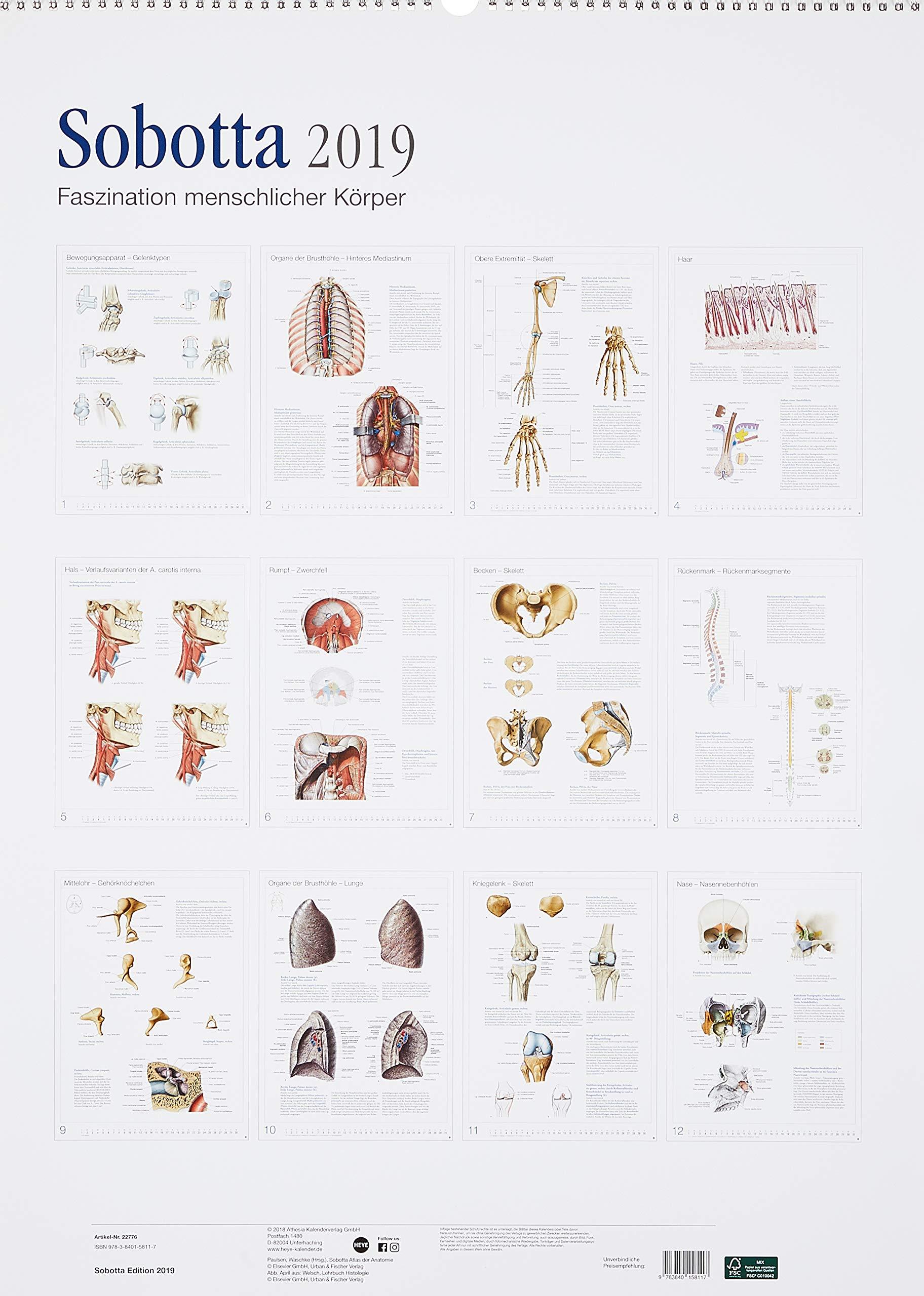 Sobotta Faszination menschlicher Körper Edition Kalender - Kalender ...