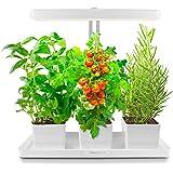 TORCHSTAR LED Indoor Garden, Herb and Kitchen Garden, Auto-Timer Function, 24V Low Voltage, Height Adjustable CRI 95 for Plan