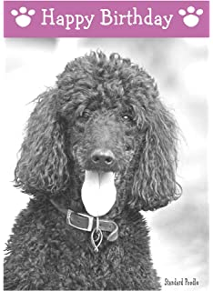 Labradoodle dog birthday card amazon office products standard poodle dog birthday card bookmarktalkfo Gallery