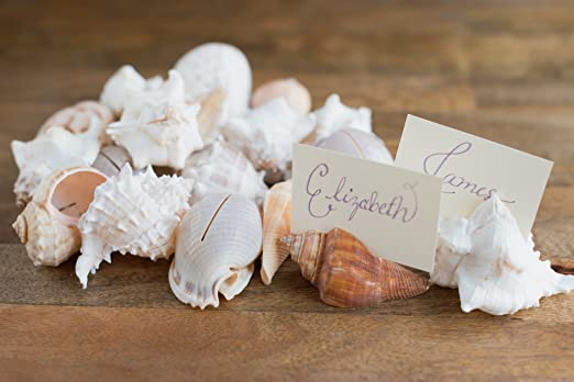 Christmas Tablescape Decor - Assorted genuine seashell place card holders - Set of 20 by Hinterland Trading