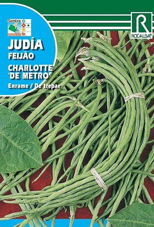 Semilla Judía De Metro Charlotte - Rocalba: Amazon.es: Jardín