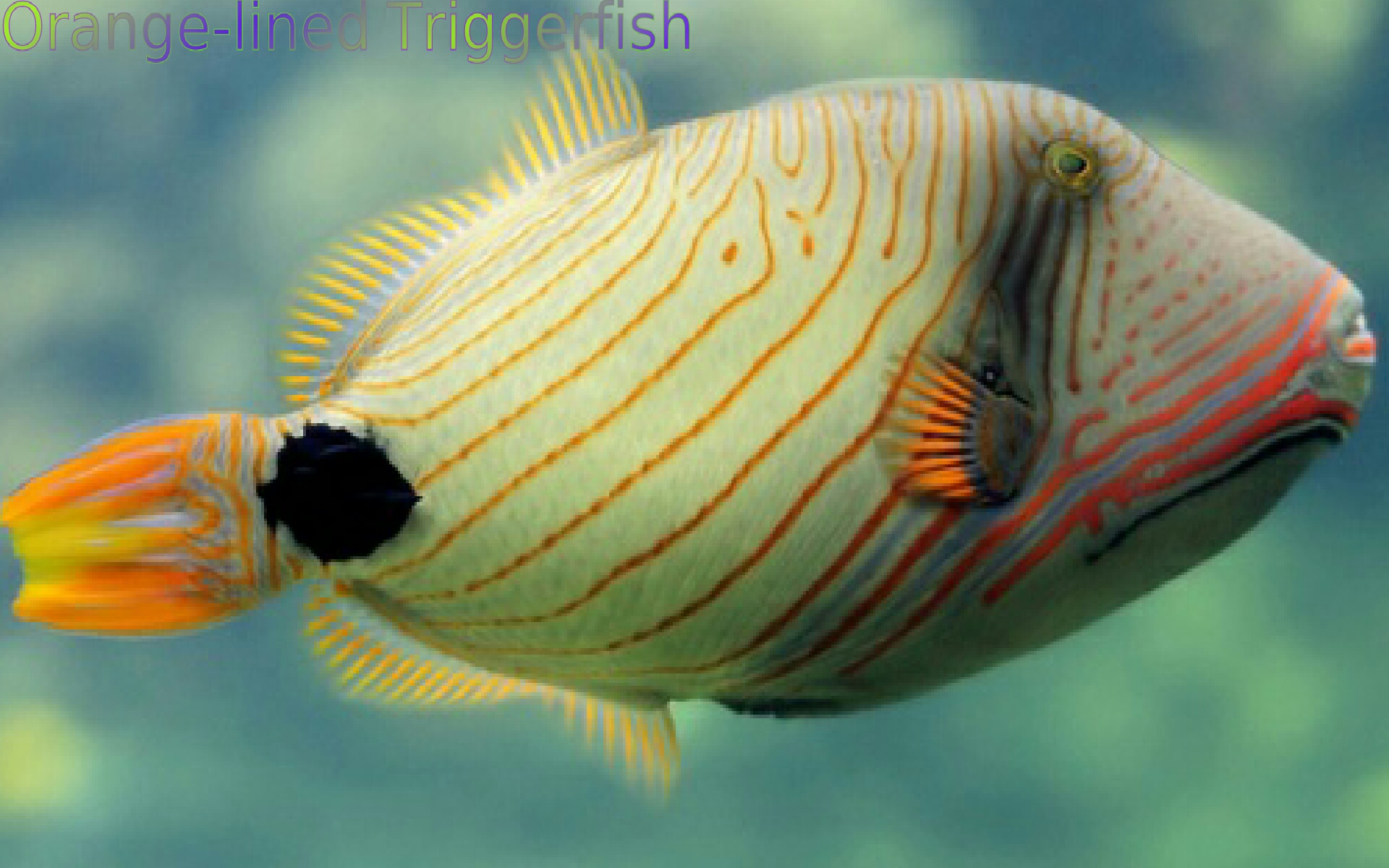 Fish of the coral reef 2 appstore para android for Fish of the amazon