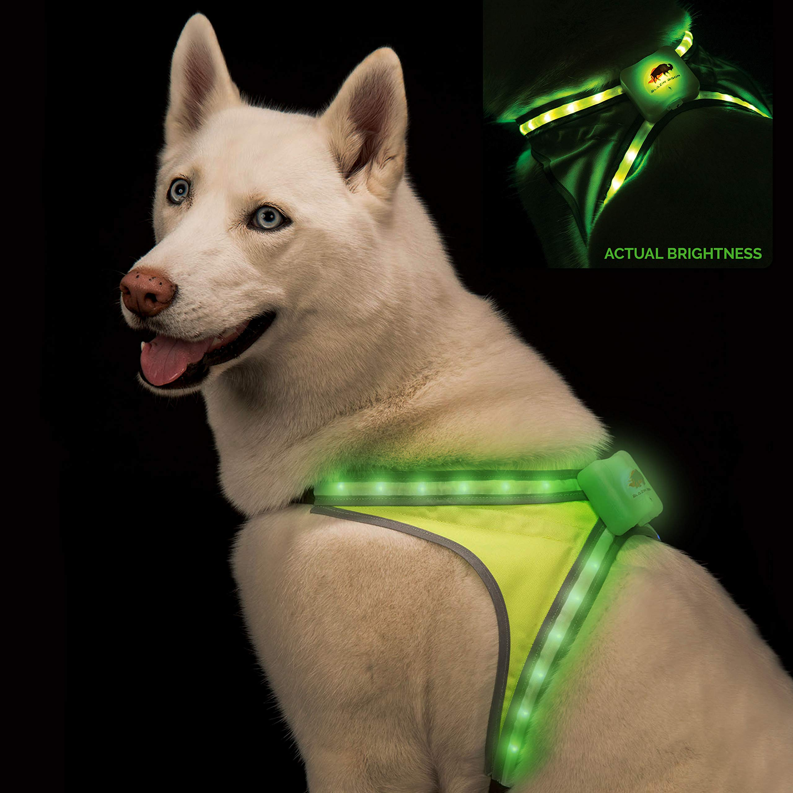 Blazin' Safety LED Dog Harness | 8 Colors Plus 6 Flashing Modes Reflective Light Vest | USB Rechargeable, Rainproof, Lightweight, Adjustable Sizing, Up to 15 Hour Charge (L)