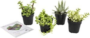 """Altman Plants Assorted Live Succulents Desk Buddy Collection Easy care plants for Indoor, Office, Kitchen, 2.5"""", 4 Pack"""
