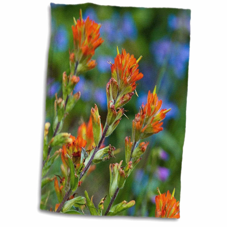 3D Rose Indian Paintbrush-Penstemon-Glacier Np-Montana-Us27 Cha2479-Chuck Haney Hand//Sports Towel 15 x 22
