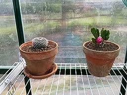 Amazon Com Palram Nature Series Mythos Hobby Greenhouse