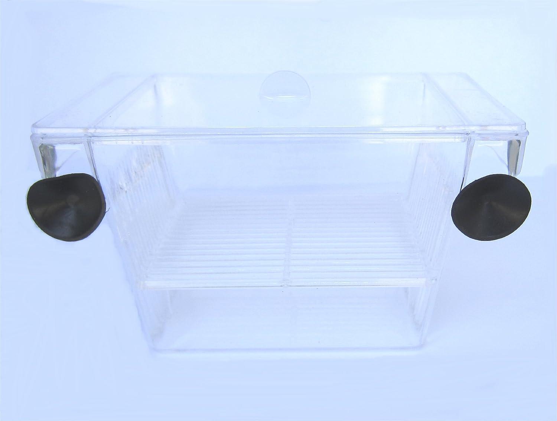 YML Fish hatchery Tank - 5-Inch x 2.75-Inch x 2.75-Inch H001