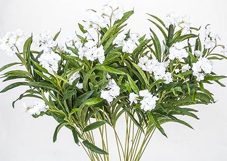 Oleander plant white set of 4 plants amazon kitchen home oleander plant white set of 4 plants mightylinksfo